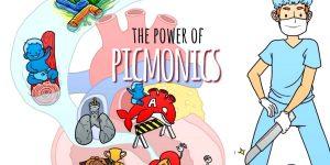 The Power of Picmonics Plus Get 20% OFF!